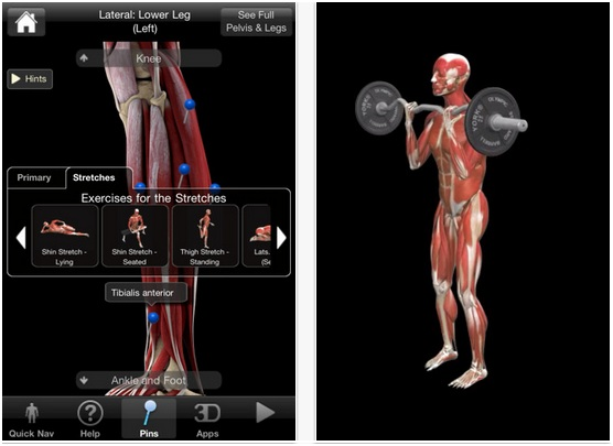 iMuscle app